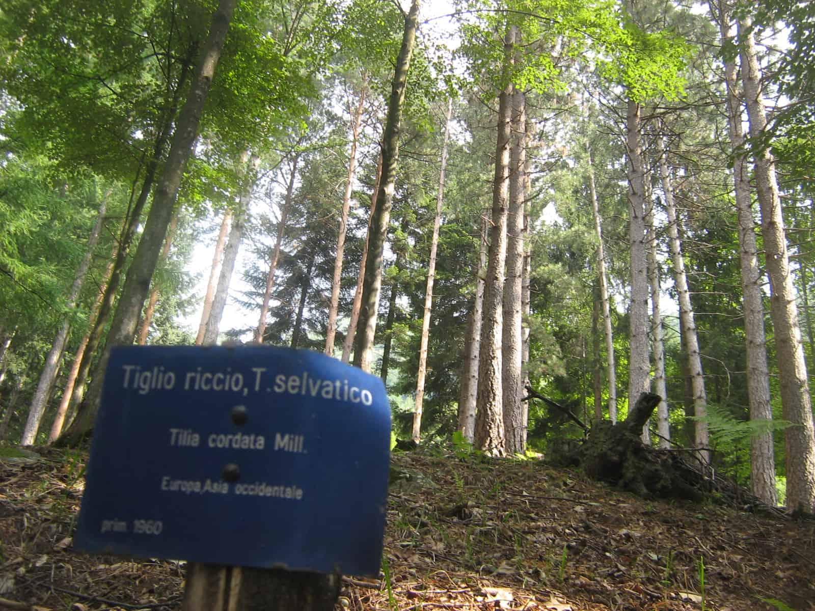 demanio forestale